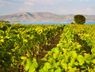 The warm  Mediterranean sun gives perfect conditions for exquisite wine production