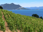 Wineyards in surroundings - 4 bedroom beachfront house in Orebic, Croatia