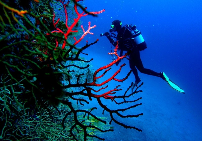 Scuba diving on Korcula Island?